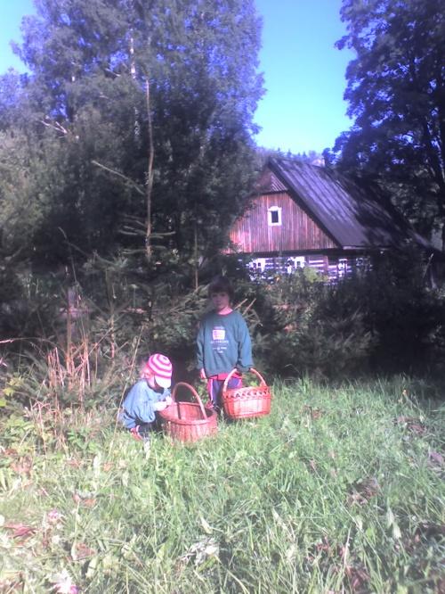"""""""Uvaříš nám houby?"""" volají chlapečkové a ukazují mi košík plný maličkých lysohlávek."""