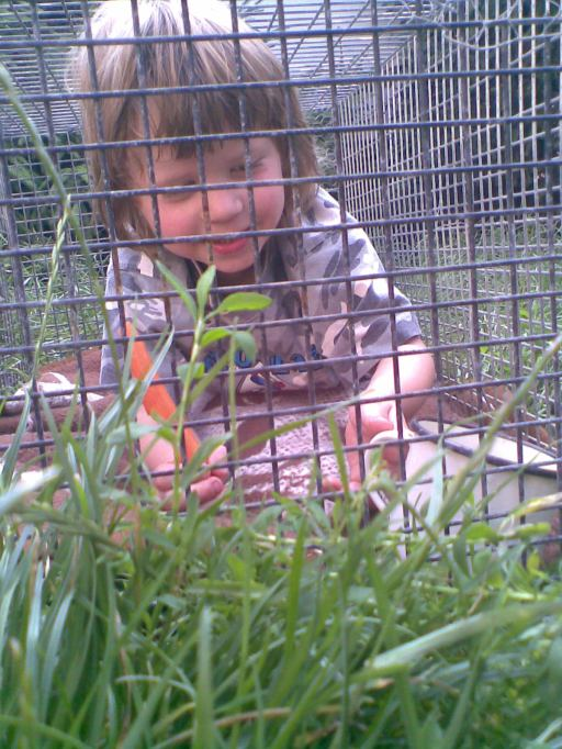 Oblíbená hrana králíčky.
