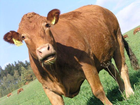 kravy 4
