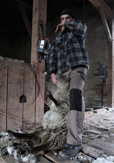 Bača a šťastná ovce