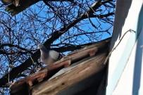 Osamělý holub