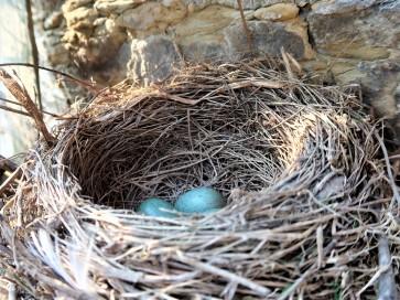 Kosí hnízdo v naší zahradě